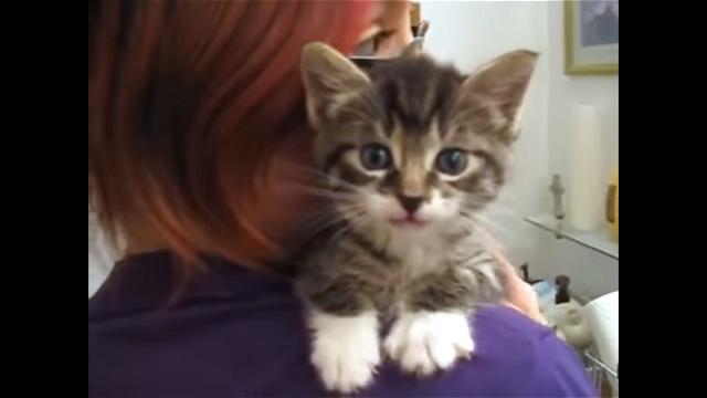 これはカワイイ!|話し掛けると元気な声で返事をしてくれる子猫