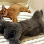 お風呂のフタの上は温かいと信じ切っていた猫が冷たいフタに乗った結果