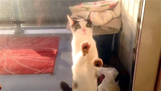 家の中に入りたい猫たちが「ドアを開けにゃさい!」と猛烈にアピール