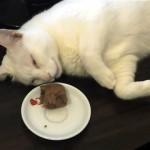 ぐっすり眠る猫の鼻先に食べ物を置いてみた結果、こうなった