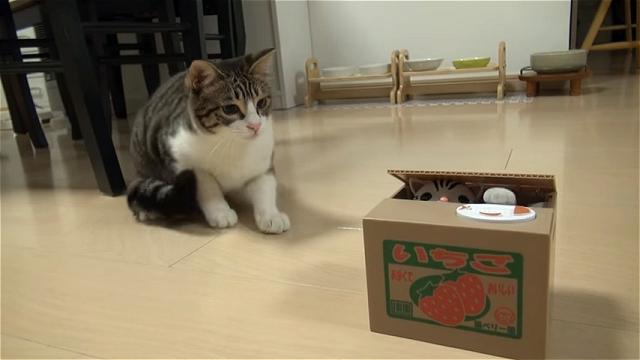 押したら子猫が顔を出すオモチャの貯金箱に嵌ってしまったニャンコ。