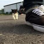 投稿者さんに付き纏って離れない小さな野良猫を愛おしく感じた結果