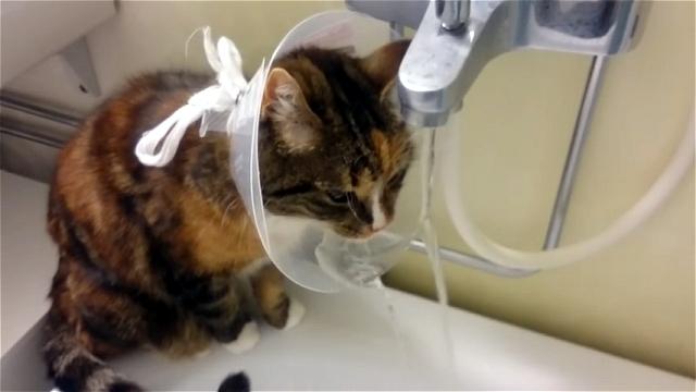 邪魔で不便なエリザベスカラーを有効活用する方法を発見した猫