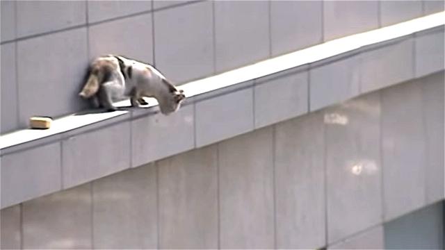 これはスゴイ!|ビル2階の外壁棚に居る猫が決死のジャンプを試みた結果…