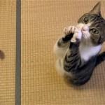 これはズルイ!|あげずに居られないオヤツをおねだりする子猫の仕草