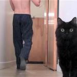 飼い主さんが手にした物に「あれは、もしや…」と思考をフル回転させる猫(笑)