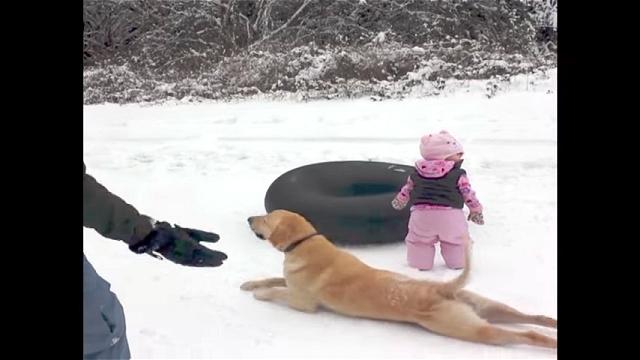 これはスゴイ!|雪の上を前足だけ使って器用に移動するワンちゃん(笑)