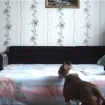 飼い主さんの言いつけを破ってワンちゃんがベッドに上がったところこうなった