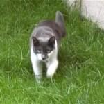 ビデオ撮りされていることに気付いた猫。獲物を狙うようにジワジワと忍び寄ってきた結果