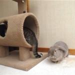 これは痛い!|猫の側で寛いでいるウサギに突如訪れた予想外の出来事(笑)