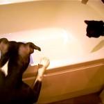 お約束事!|バスタブを覗き込むニャンコとワンちゃんに起こった予想通りの展開(笑)