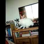 これは珍しい!|飼い主さんに悪戯を注意された猫がしてみせた意外な行動