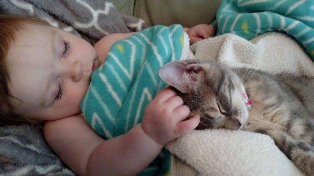 毎日一緒にお昼寝する女の子と子猫のイービー。可愛い寝顔にホッコリ胸キュン!