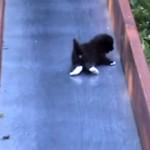 親子でコント!|滑り落ちる子猫を助けるも無駄足を踏む結果となった母猫