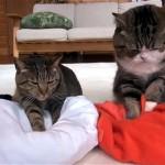 そう来ると思った(笑)!|寝床を整える二匹の猫。準備が出来てさあ寝ようと思ったら…