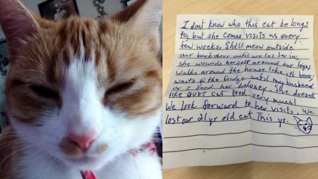 外出先から帰ってきた猫に添えられた手紙。こんなことが書いてありました!