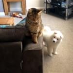 クールな先住猫と新入りの子犬が互いに打ち解けて仲良くなるまで