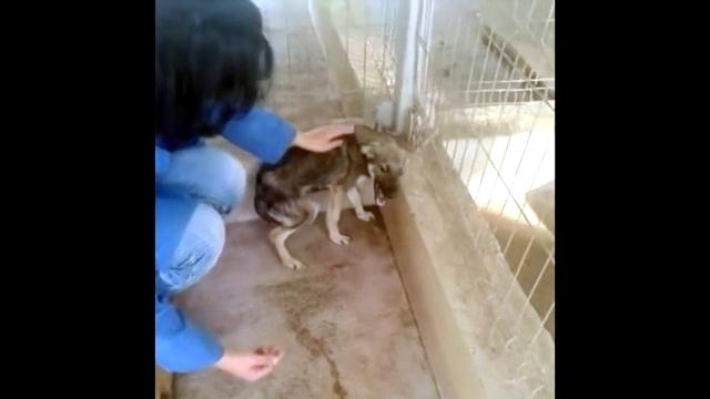 虐待を受け続けたが故に人間の愛情を素直に受け入れられない犬の悲痛な叫び