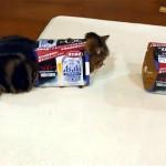 これはお見事(笑)!|既に箱に入っている猫の前にもう1つ箱を置いてみた結果