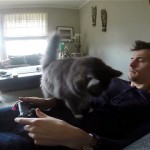 これは可愛い!|ビデオゲームをしようとすると必ず現れる構ってちゃん猫