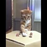 指のモグラたたきに挑戦する猫。どんどん夢中になる猫がおもしろ可愛い!