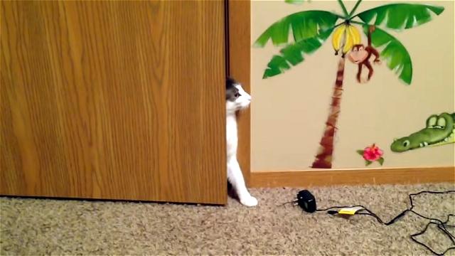 「この部屋には入っちゃダメ!」と入室を禁止されている猫。そう言われてもニャ~…
