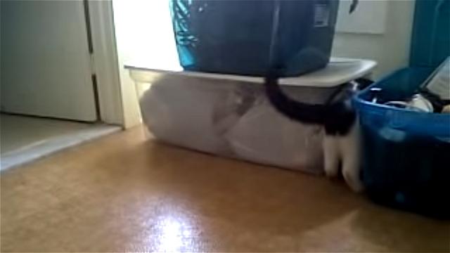 これはお見事!|オモチャを追いかけるネコ。何故か笑える4秒のネコ動画