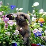 花の香りを楽しむ動物たち – 心癒される素敵な写真集 30枚