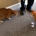 これはスゴイ! 猫にお散歩バルーン猫を近づけてみたところ、衝撃の結末に(笑)