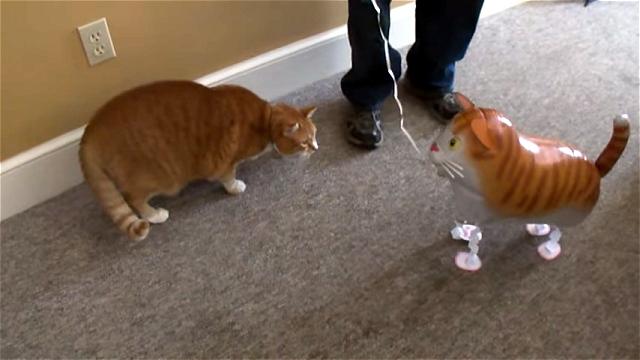これはスゴイ!|猫にお散歩バルーン猫を近づけてみたところ、衝撃の結末に(笑)