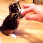 子猫の放つカワイイ猫パンチでノックアウトされること間違いなし!