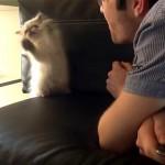 これはカワイイ!|吹き掛けられた息に戦いを挑むおもしろ可愛い子猫