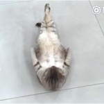 何やら変なポーズをとる猫。何をしているのかと思ったら…
