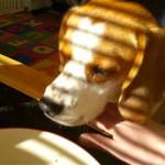 飼い主さんが食べている朝食を貰うためにワンちゃんが考えた意外な方法(笑)