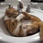 洗面ボウルの中で遊んでいた猫に起きた予想通りの悲劇(笑)