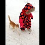 赤ちゃんと仲良く散歩していたところ、突然予想外の行動をとる猫