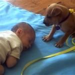 ぐっすり眠る赤ちゃんを見て眠くなった子犬の可愛い結末
