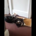 床に寝そべってゴロゴロしている猫の突然の不可解な行動(笑)