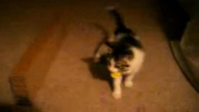 猫じゃらしを猛ダッシュで追い掛ける子猫に起こったおもしろい出来事!