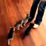 これは胸キュン! ミャーミャーと鳴きながら女性に迫る6匹の可愛い子猫たち