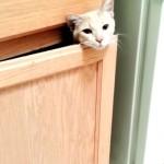 これはカワイイ!|飼い主さんが呼ぶと一瞬だけ顔を覗かせる愛らしい子猫