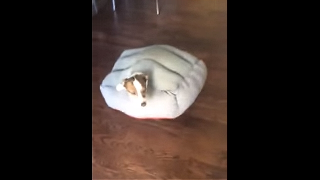 ベッドにあいた穴に嵌ってしまい情けない顔をしているワンちゃん