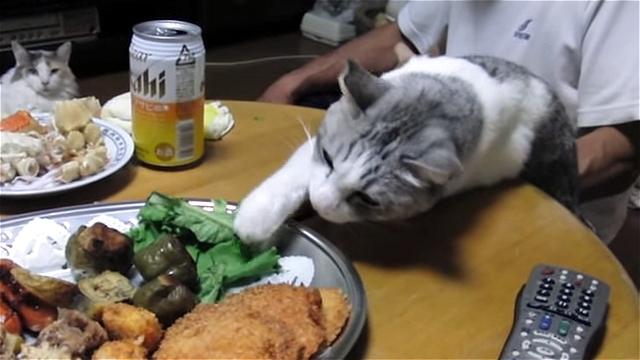 盗み食いを企む食いしん坊な猫の大胆すぎる行動