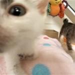 毎年数千匹の保護された子猫の世話をする『子猫の保育園』の日常を紹介 10枚・動画