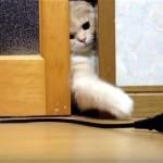 扉の隙間から電源コードを取ろうと必死に頑張る子猫