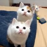 可愛さ満点!|ダンスをするように動きがシンクロする3匹の可愛い子猫