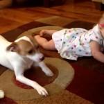 これは微笑ましい!|人間の赤ちゃんにハイハイを教える優しいワンちゃん