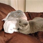 気になるビニール袋の中身を探ろうとした猫に訪れた驚きの出来事!