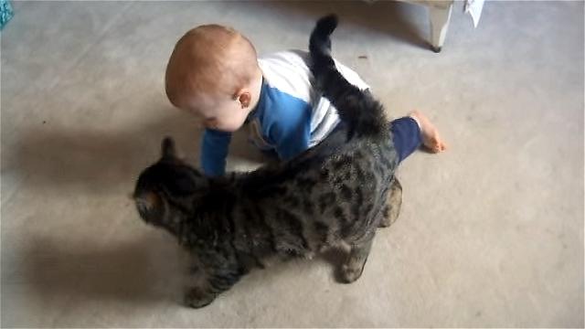 これは残念!|赤ちゃんのことが大好きが故に猫が招いた不本意な結果(笑)