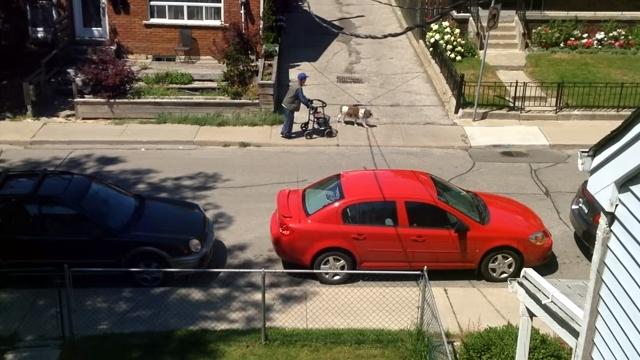 散歩するお爺さんを何気なく気遣う愛犬の優しさにホッコリ♡
